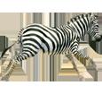 Imagen Cebra